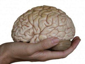 εγκέφαλος χέρι