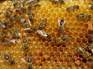Μέλισσες, τα πιο πολύτιμα πλάσματα του πλανήτη μας