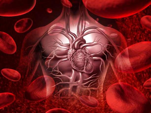 καρδιαγγειακό καρδιά αρτηρίες κυκλοφορικό ανατομία αίμα
