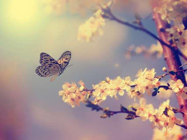 πεταλούδα τοπίο άνθος