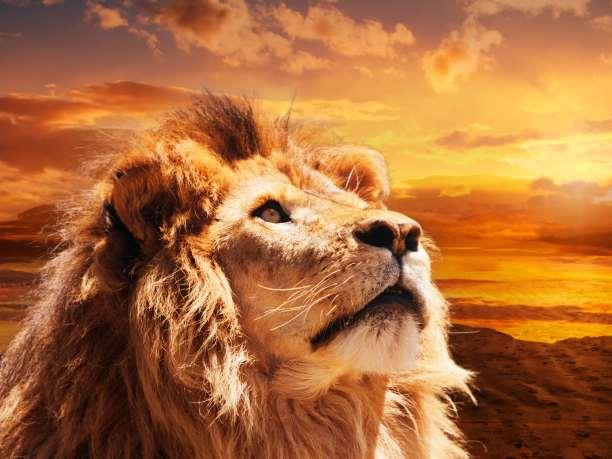 Ελεύθερο λιοντάρι