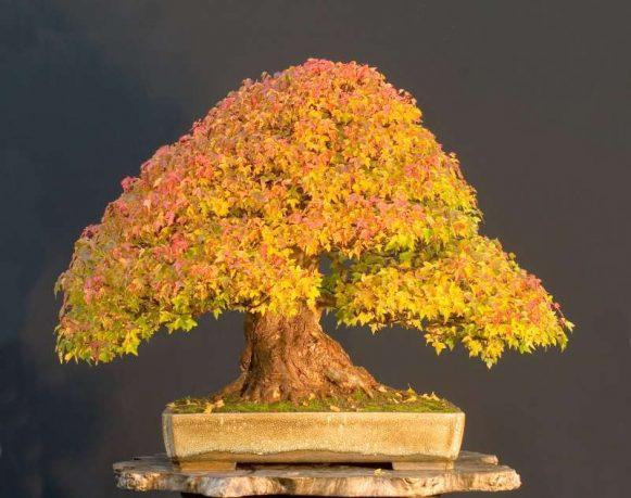 http://enallaktikidrasi.com/2016/11/6-simantika-pragmata-axizei-gnorizete-bonsai/