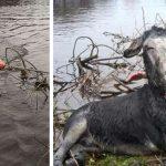 Αξιαγάπητη γαϊδουρίτσα «σκάει» πλατύ χαμόγελο όταν εθελοντές τη σώζουν από πλημμύρα!