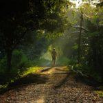 Ο άνθρωπος που δημιούργησε μόνος του ένα ολόκληρο δάσος