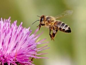 Άνθρωποι μέλισσες και άνθρωποι μύγες