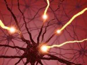 νευρώνες του εγκεφάλου ελληλεπιδρούν