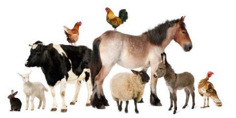 Τεστ με ζώα αποκαλύπτει τι σύντροφο θεωρείτε κατάλληλο για σας