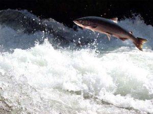 ψάρι κόντρα στο ρεύμα ποτάμι