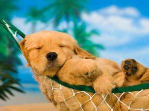 ύπνος κουτάβι ζώα