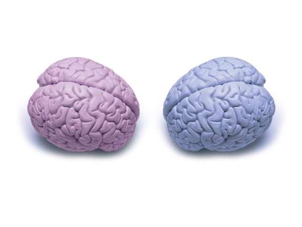 γυναίκες άτρες εγκέφαλος