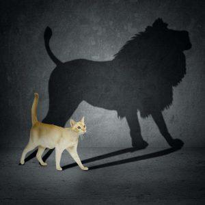 γάτα αυτοπεποίθηση αυτοεκτίμηση
