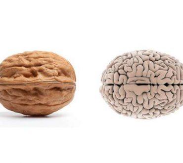Καρύδι και Εγκέφαλος