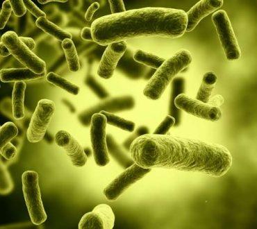 Ανθρώπινο Μικροβίωμα