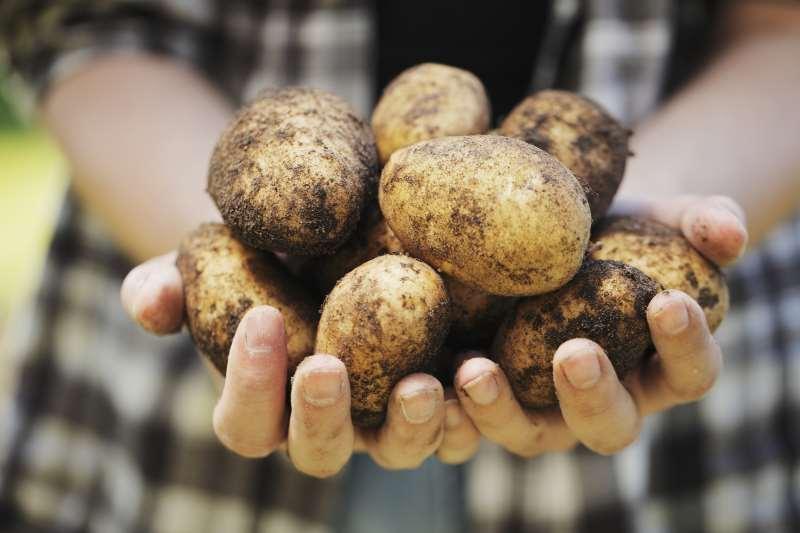 Πως η ταπεινή πατάτα έσωσε εκατομμύρια ανθρώπους