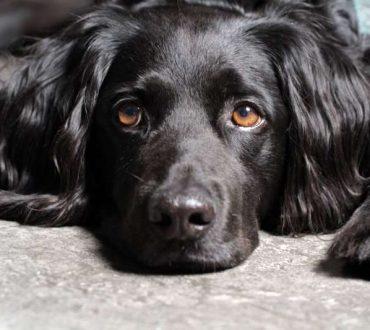 Φωτογραφία ενός σκύλου που του έχουν κάνει στείρωση