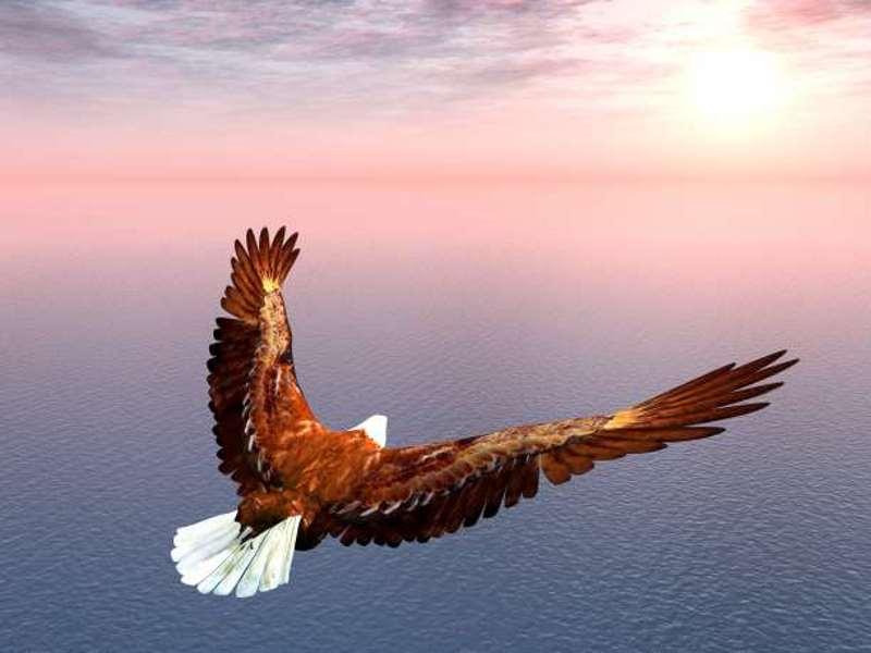 Ο λαγός και ο αετός
