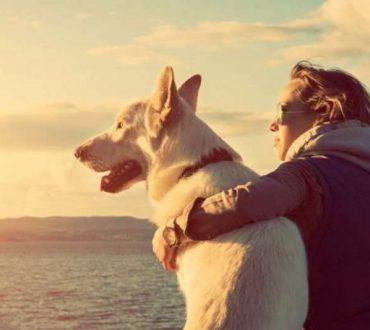 Οι σκύλοι συγχρονίζουν τους κτύπους της καρδιάς τους με τη δική μας