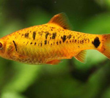 Το θυμωμένο ψάρι που το έλεγαν Ματέο
