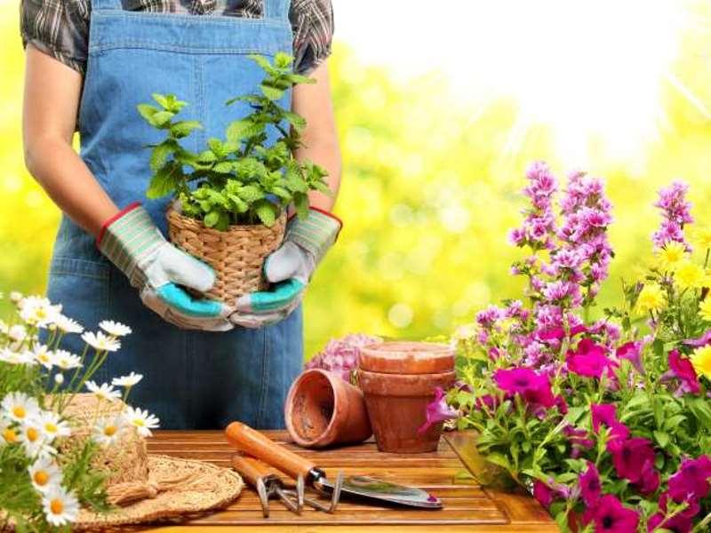 6 βήματα για να φτιάξετε τον κήπο των ονείρων σας