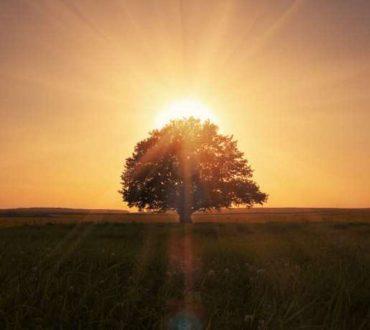 Το δέντρο των επιθυμιών