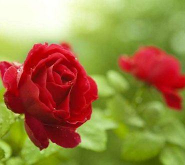 Καρδιά λουλούδι