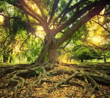 Σούζαν Σίμαρντ: Πώς μιλούν τα δέντρα μεταξύ τους (Βίντεο)