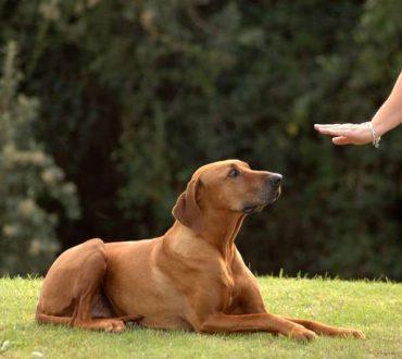 Όσα θα ρωτούσατε έναν εκπαιδευτή σκύλων - Συνέντευξη με τον Γιάννη Αραχωβίτη
