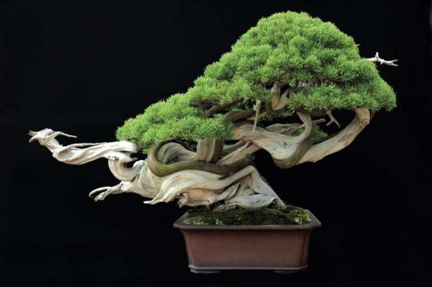 https://enallaktikidrasi.com/2016/11/6-simantika-pragmata-axizei-gnorizete-bonsai/