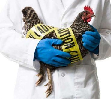 Γρίπη των πτηνών: Συμπτώματα και μέτρα προφύλαξης
