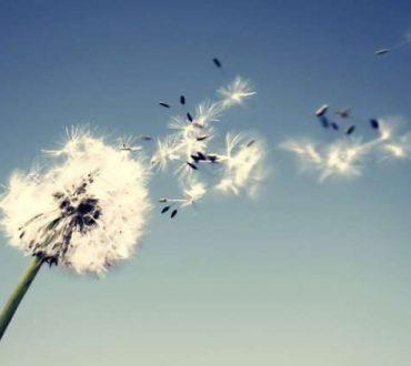 Όταν η Ψυχή συνάντησε τον άνεμο