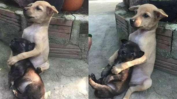 Σκύλος αγκαλιάζει ασταμάτητα τον φίλο του μετά την υιοθεσία τους!