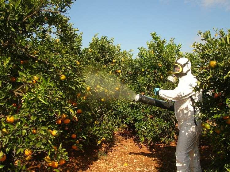 Τα πιο επιβαρυμένα με φυτοφάρμακα φρούτα και λαχανικά