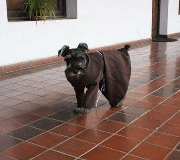 Ο σκύλος που μετά την υιοθεσία του έγινε μοναχός!