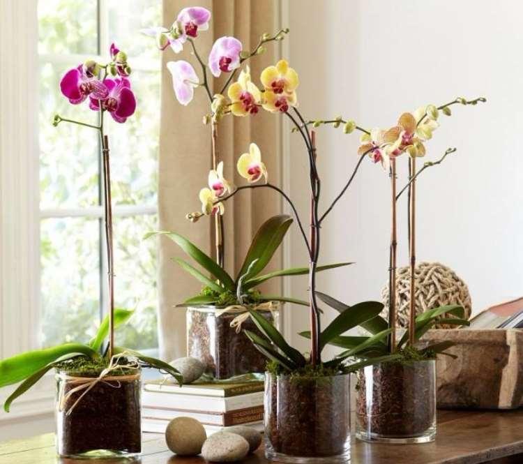 5 φυτά που μας προσφέρουν οξυγόνο, ακόμα και κατά τη διάρκεια της νύχτας