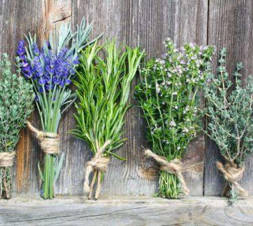 Φαρμακευτικά βότανα και ο ρόλος τους στη διατήρηση και την αποκατάσταση της υγείας