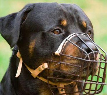 Όταν περιορίζεις έναν επιθετικό σκύλο, δεν παύεις να είσαι φιλόζωος