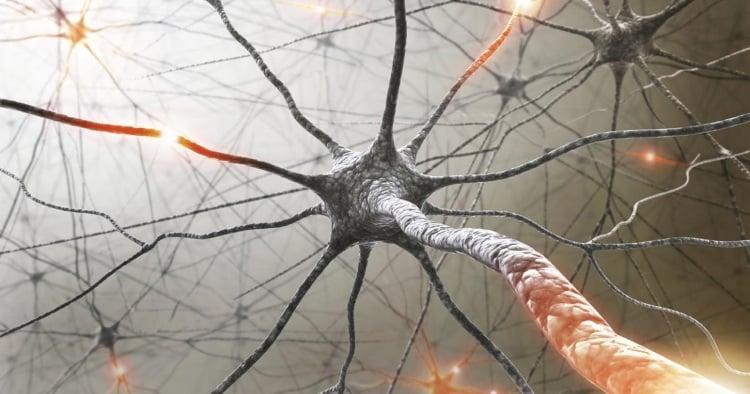 Η μυελίνη και ο ρόλος της στην «έκρηξη» του εγκεφάλου