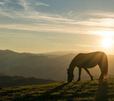 Πώς τα ζώα μας θεραπεύουν και μας διδάσκουν
