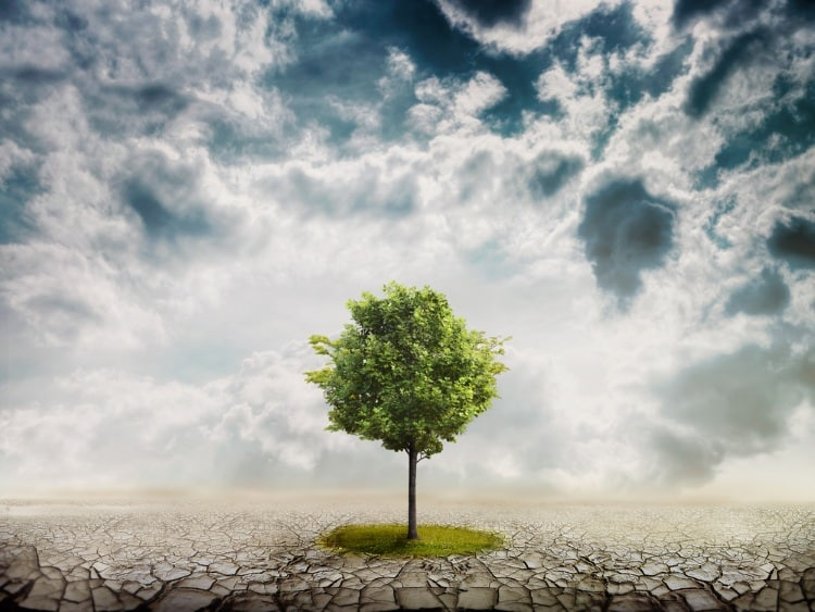 Ένα δέντρο μόνο επάνω στη γη...