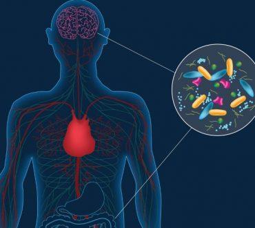 Πώς τα εντερικά βακτήρια προκαλούν άγχος, σύμφωνα με την επιστήμη
