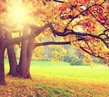 Πώς να φέρετε τη Φθινοπωρινή ενέργεια στο χώρο σας!