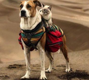 Η ξεχωριστή φιλία μιας γάτας και ενός σκύλου, που λατρεύουν να ταξιδεύουν μαζί και να ζουν την περιπέτεια!
