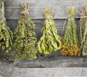 Βοτανολογία της Κρήτης: Η μεγάλη ποικιλία και οι εξαιρετικές ιδιότητες των ντόπιων φυτών και βοτάνων