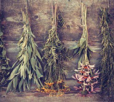 Αντιβιοτικά βότανα: Η χρησιμότητα και τα οφέλη τους