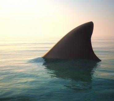 Το δόλωμα του καρχαρία: Όταν βλέπουμε συνεχώς εμπόδια ανάμεσα σε εμάς και στο στόχο μας