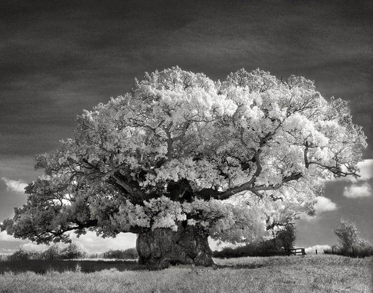 Μια γυναίκα φωτογράφιζε τα γηραιότερα δέντρα του πλανήτη για 14 χρόνια και το αποτέλεσμα είναι εκπληκτικό!