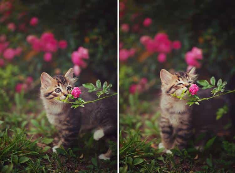 Τα ζώα απολαμβάνουν τα αρώματα των λουλουδιών