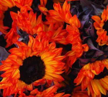 2018: Mια πορτοκαλί χρονιά με τη δόνηση της αφθονίας, της αρμονίας και της χαράς