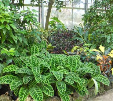 Επιστήμονες ανακάλυψαν ότι τα φυτά μπορούν να πάρουν αποφάσεις υπό συνθήκες ανταγωνισμού!