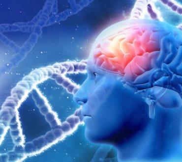 Οι επιστήμονες εντοπίζουν την ύπαρξη επιγενετικών αναμνήσεων που περνούν από γενιά σε γενιά